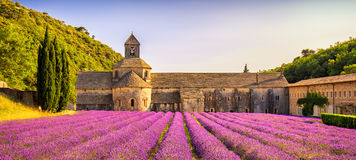 Abbey of Senanque blooming lavender flowers panorama at sunset. Stock Image