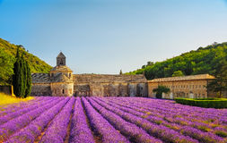 Abbey of Senanque blooming lavender flowers on sunset. Gordes, L Royalty Free Stock Photo