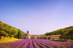 Abbey of Senanque blooming lavender flowers on sunset. Gordes, L Royalty Free Stock Images