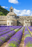 Abbey of Senanque and blooming rows lavender flowers Royalty Free Stock Photos