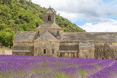 Abbey of Senanque and blooming rows lavender flowers Stock Photos
