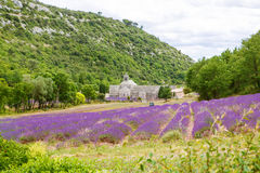 Abbey of Senanque and blooming rows lavender flowers Royalty Free Stock Photography