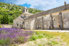 Abbey of Senanque and blooming rows lavender flowers Stock Photo