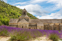 Abbey of Senanque and blooming rows lavender flowers Royalty Free Stock Image
