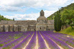 Abbey of Senanque and blooming rows lavender flowers Stock Images