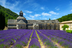 Abbey of Senanque and blooming rows lavender flowers. Royalty Free Stock Image