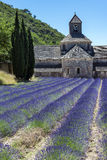 Abbey of Senanque and blooming rows lavender flowers. Stock Photos