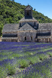 Abbey of Senanque and blooming rows lavender flowers. Stock Images