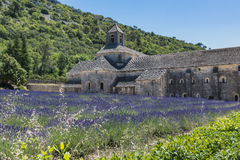 Abbey of Senanque and blooming rows lavender flowers. Royalty Free Stock Photography