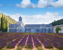 Abbey of Senanque with lavander field. Provence Royalty Free Stock Photos