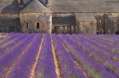 Abbey Senanque och lavendelfält, Frankrike Royaltyfri Fotografi
