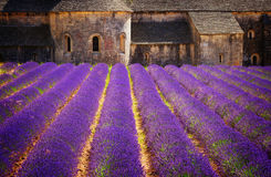 Abbey Senanque och lavendelfält, Frankrike Arkivbild