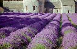 Abbey Senanque Provence France Arkivbilder