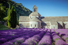 Abbey Senanque Provence France Royaltyfri Bild
