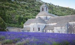 Abbey Senanque Provence France Arkivfoton