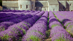 Abbey Senanque Provence France Royalty Free Stock Photography