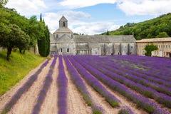 abbeyen som blommar Europa, blommar för provence för luberon för france gordeslavendel senanque vaucluse rader Royaltyfri Fotografi