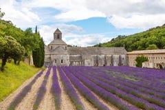 abbeyen som blommar Europa, blommar för provence för luberon för france gordeslavendel senanque vaucluse rader Royaltyfria Foton