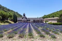 abbeyen som blommar Europa, blommar för provence för luberon för france gordeslavendel senanque vaucluse rader Arkivbilder