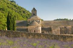 abbeyfrance provence senanque Arkivfoton