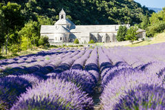 abbeyprovence senanque Royaltyfria Bilder