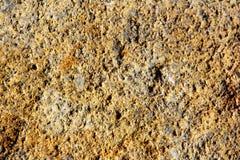 abbeystenen textures whitby Royaltyfri Foto