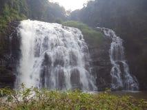 Abbi water falls. Trees background  green nature Stock Photo