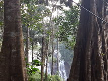 Abbi watet falls. A beautiful water falls is between two big trees Stock Image