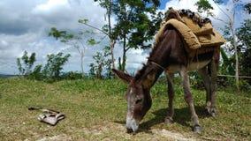 Abbia rispetto per la fauna selvatica intorno noi Immagini Stock Libere da Diritti