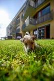 Abbia un nuovo cucciolo Fotografie Stock Libere da Diritti