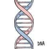 Abbildung 3d, getrennt auf weißem Hintergrund DNA-Symbol DNA-Schneckensymbol Gene Icon Stockbild