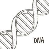 Abbildung 3d, getrennt auf weißem Hintergrund DNA-Symbol DNA-Schneckensymbol Gene Icon Lizenzfreie Stockbilder