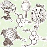 Abbildung der Betäubungsmittel - Mohnblume und Opium Stockfotografie