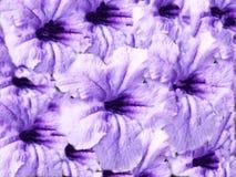 Abbildung der Blume textures Lizenzfreie Stockfotografie