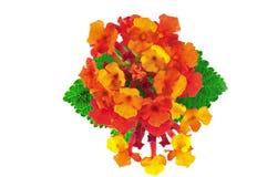 Abbildung der Blumen Stockfotografie