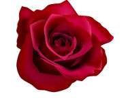 Abbildung der roten Rosen (mit Ineinander greifen) Lizenzfreie Stockbilder
