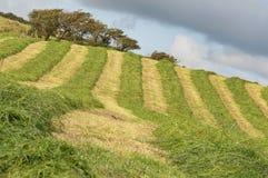 Abbildung des Bauernhoffeldes mit eben geschnittenem Gras Lizenzfreie Stockfotografie