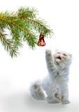 Abbildung des neuen Jahres s - ein Zweig mit Kugel des neuen Jahres s Stockbild