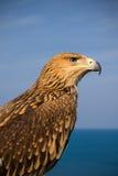 Abbildung eines braunen Adlers Stockfotos