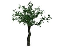 Abbildung eines Kirschbaums Lizenzfreies Stockbild