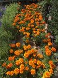 Abbildung für smellcomp Helle Blumen und Grünpflanzen stehen in den Töpfen auf Regalen und in den Behältern im Speicher verpackt Stockfotografie