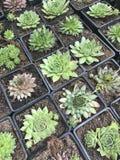 Abbildung für smellcomp Helle Blumen und Grünpflanzen stehen in den Töpfen auf Regalen und in den Behältern im Speicher verpackt Stockfotos