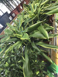 Abbildung für smellcomp Helle Blumen und Grünpflanzen stehen in den Töpfen auf Regalen und in den Behältern im Speicher verpackt Stockbilder
