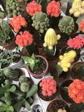 Abbildung für smellcomp Helle Blumen und Grünpflanzen stehen in den Töpfen auf Regalen und in den Behältern im Speicher verpackt Lizenzfreie Stockfotografie