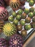 Abbildung für smellcomp Helle Blumen und Grünpflanzen stehen in den Töpfen auf Regalen und in den Behältern im Speicher verpackt Lizenzfreies Stockbild