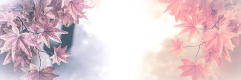 Abbildung gebildet mit speziellem Objektiv Rotahornblätter für Hintergrund Lizenzfreie Stockfotografie