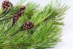 Abbildung kann als Hintergrund benutzt werden Einfacher abstrakter Weihnachtshintergrund mit Kiefernkegel auf Niederlassung Stockfotos
