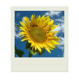 Abbildung mit Sonnenblume und blauem Himmel Stockfotos