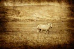 Abbildung mit weißem Pferd Lizenzfreie Stockbilder