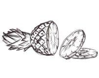 Abbildung von Ananas. Ske stock abbildung